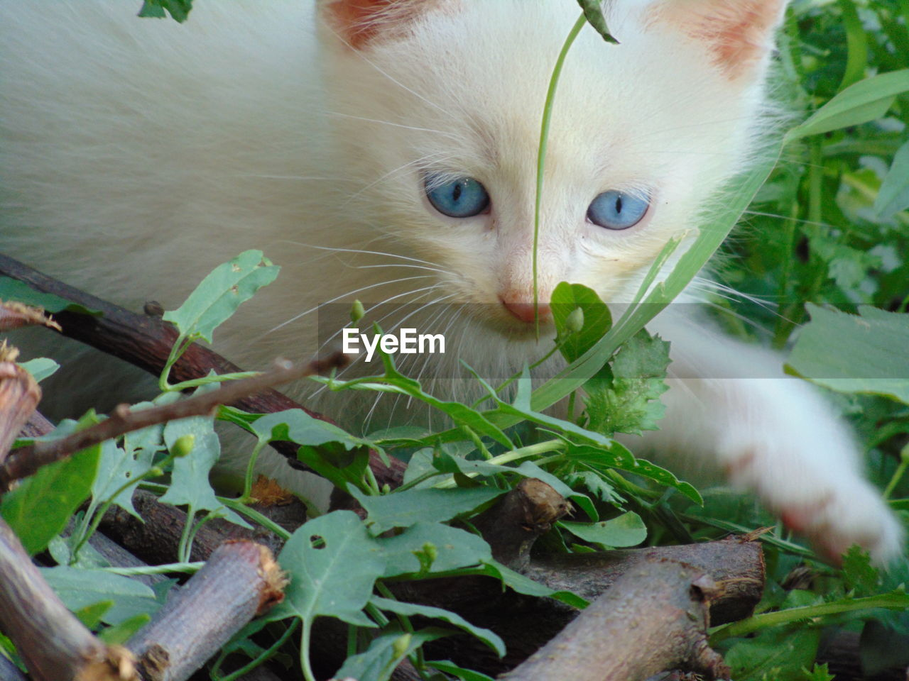 domestic, pets, mammal, animal themes, domestic animals, one animal, cat, animal, domestic cat, feline, vertebrate, leaf, plant part, plant, close-up, animal body part, no people, nature, whisker, looking at camera, animal head
