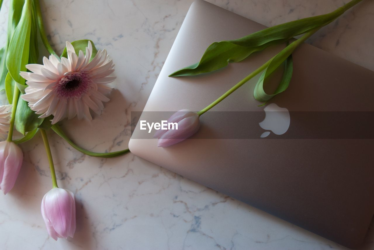 flower, freshness, white color, fragility, table, indoors, no people, high angle view, petal, close-up, flower head, nature, beauty in nature, leaf, healthy eating, day, food