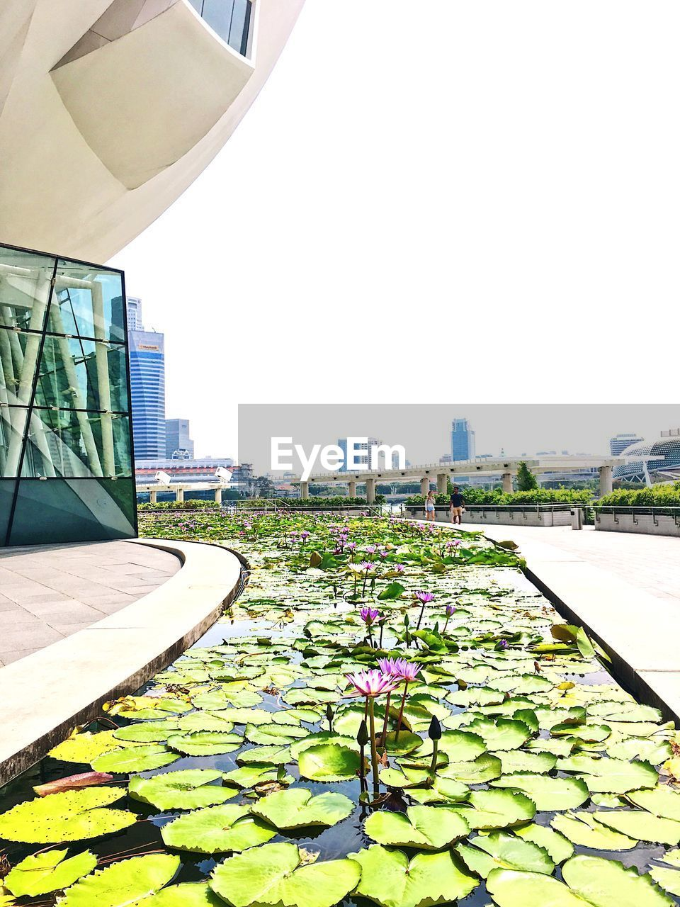 architecture, building exterior, built structure, growth, flower, nature, day, no people, leaf, water lily, outdoors, city, beauty in nature, plant, clear sky, green color, floating on water, water, lily pad, freshness, lotus water lily, sky, fragility, close-up