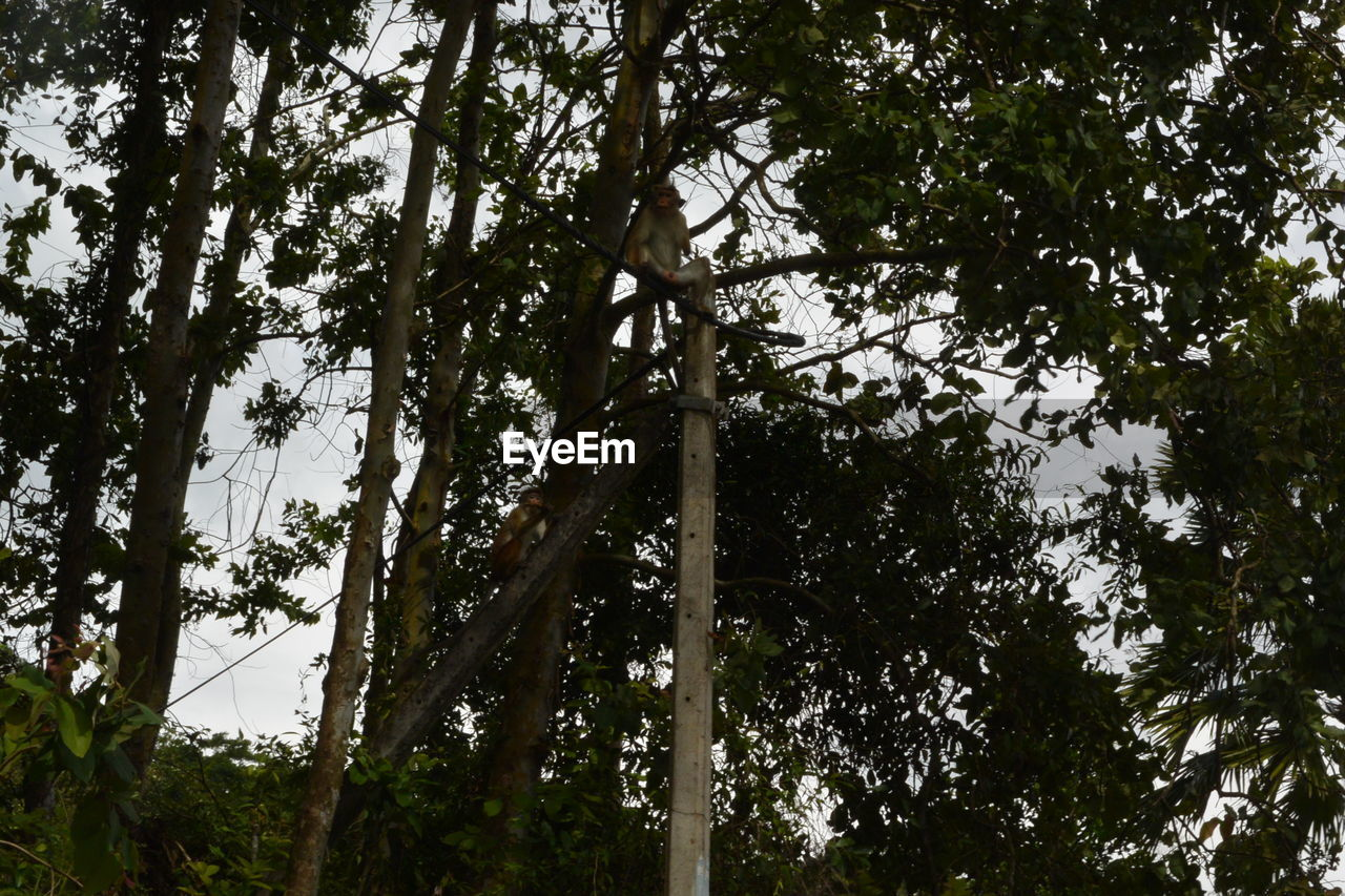 tree, plant, forest, low angle view, growth, land, nature, tree trunk, no people, trunk, day, green color, tranquility, outdoors, branch, beauty in nature, non-urban scene, sky, woodland, tall - high, bamboo - plant, directly below, tree canopy
