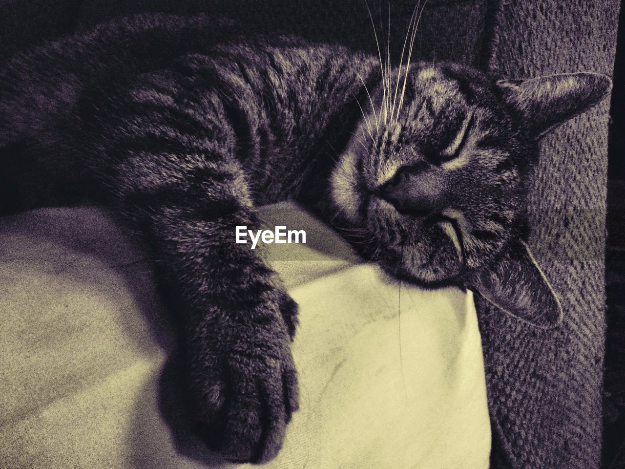 Close-Up Of Tabby Sleeping On Sofa