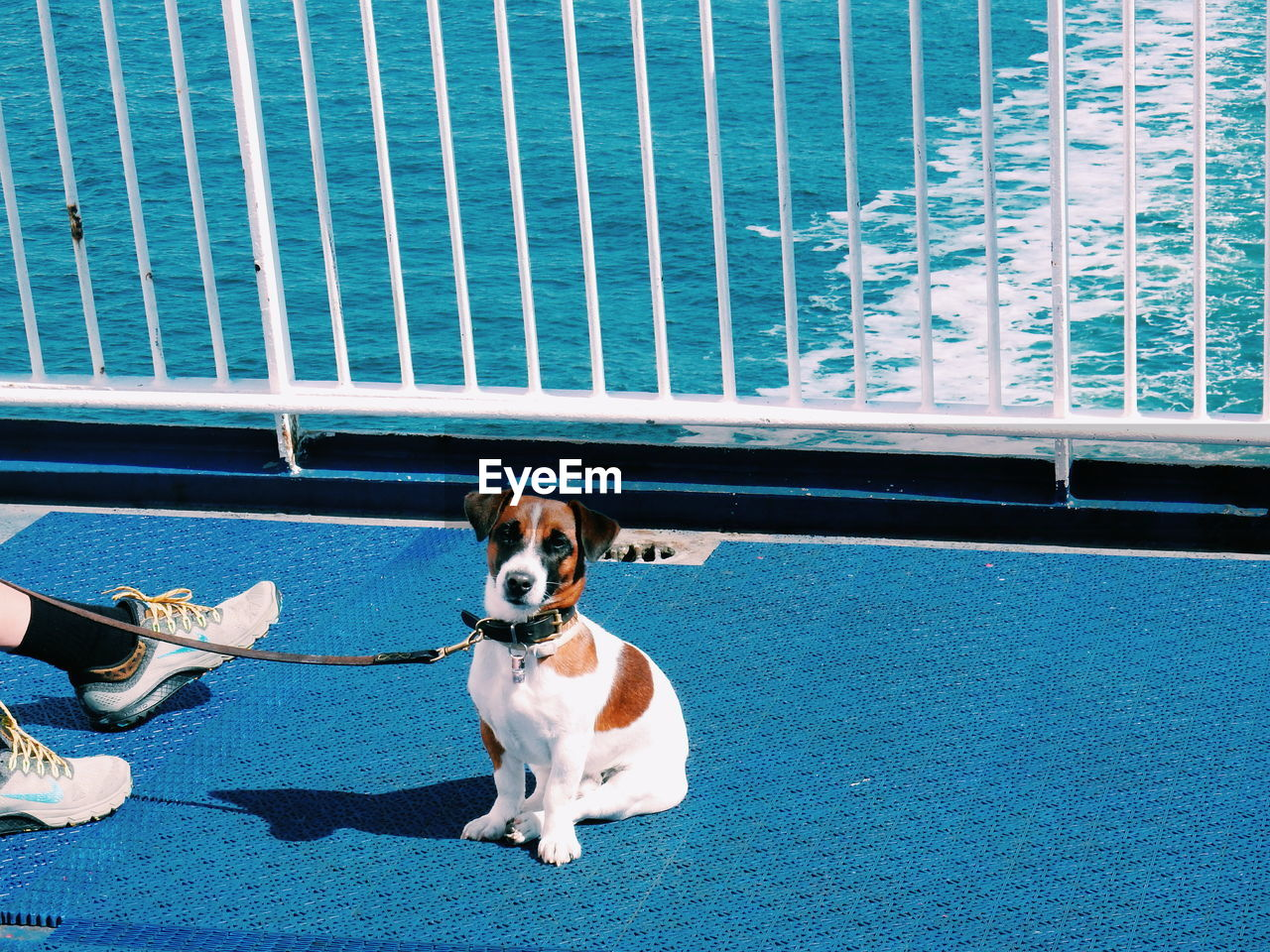 Portrait of dog sitting by owner at boat