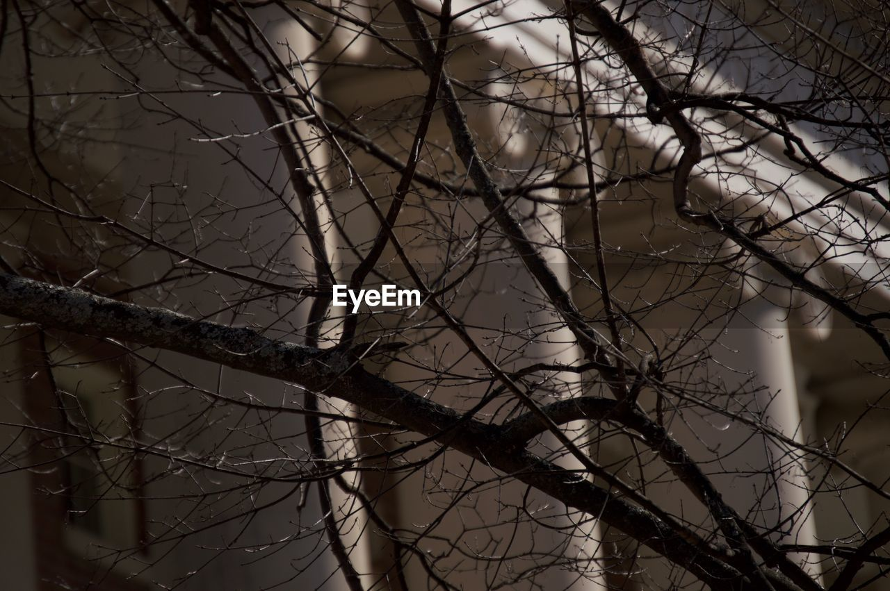bare tree, branch, nature, no people, outdoors, beauty in nature, tree, day, close-up, sky