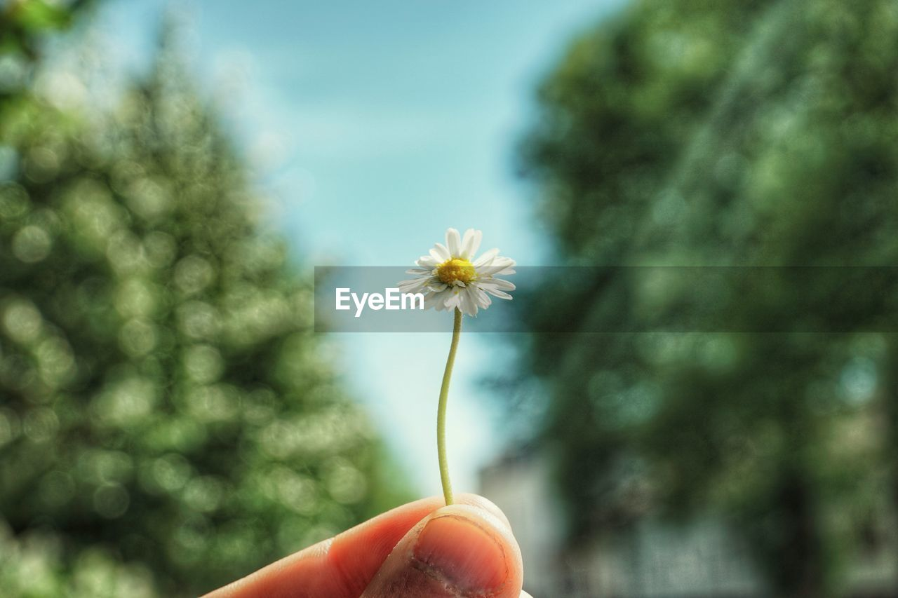 human hand, flower, flowering plant, plant, hand, human body part, holding, vulnerability, fragility, freshness, one person, finger, human finger, focus on foreground, body part, real people, nature, close-up, unrecognizable person, day, outdoors, flower head