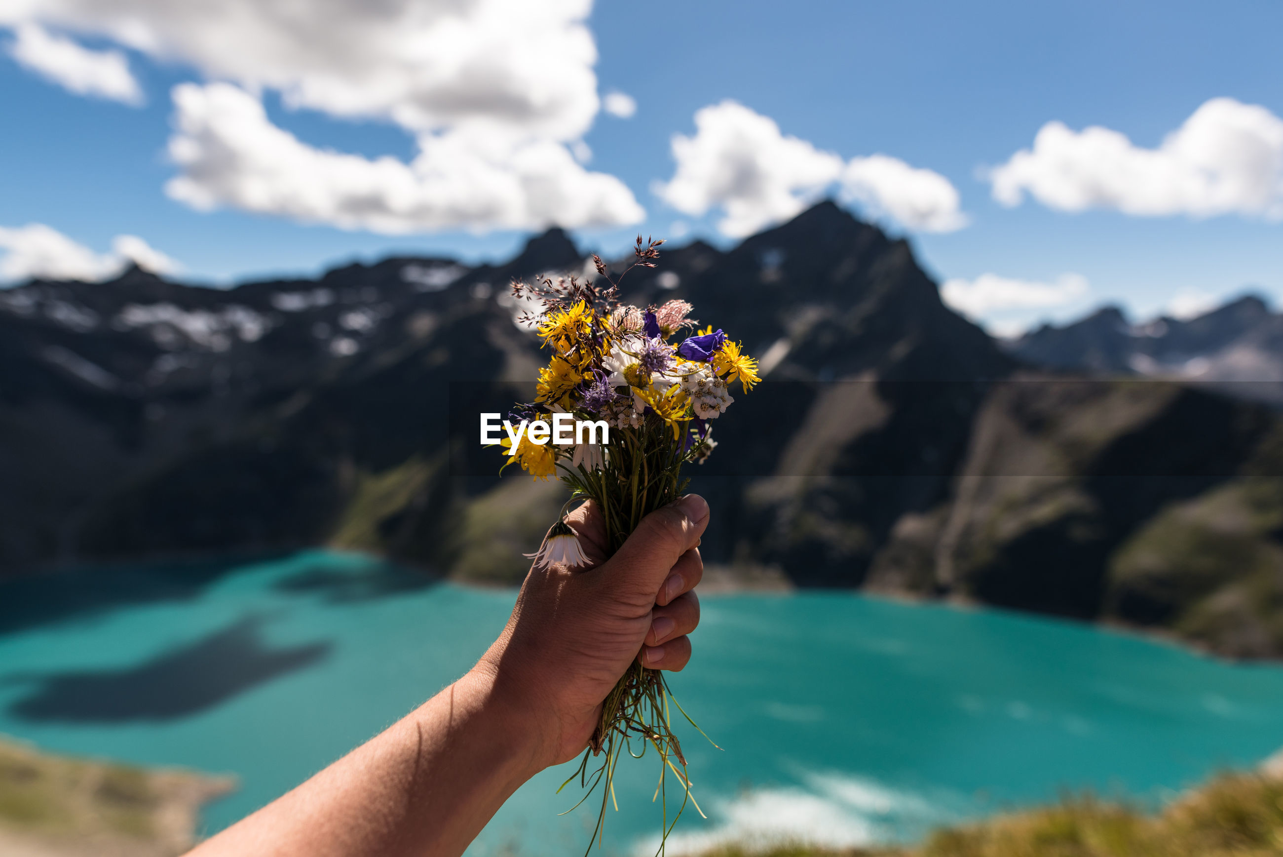 Cropped image of hand holding flowers against mountains