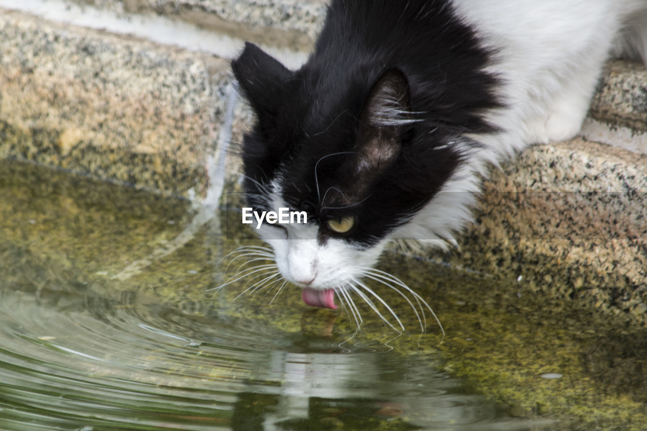 HIGH ANGLE VIEW OF CAT AT WATER