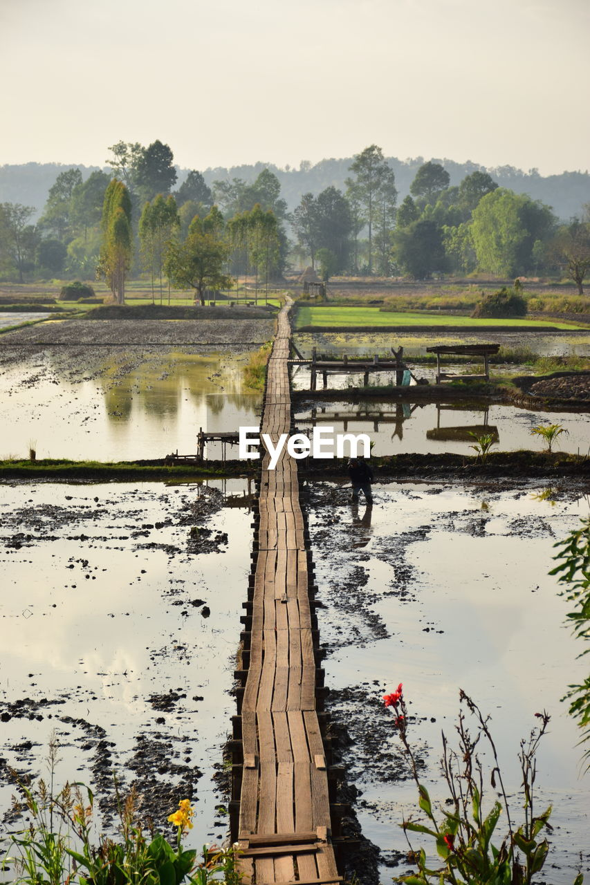 water, nature, tree, outdoors, beauty in nature, river, no people, tranquility, agriculture, day, field, tranquil scene, growth, wood - material, scenics, rural scene, sky