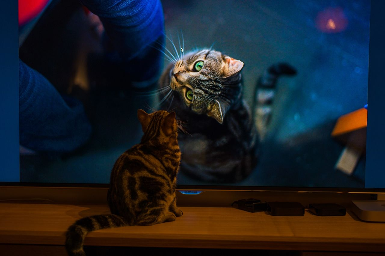 Cat Watching Television At Home