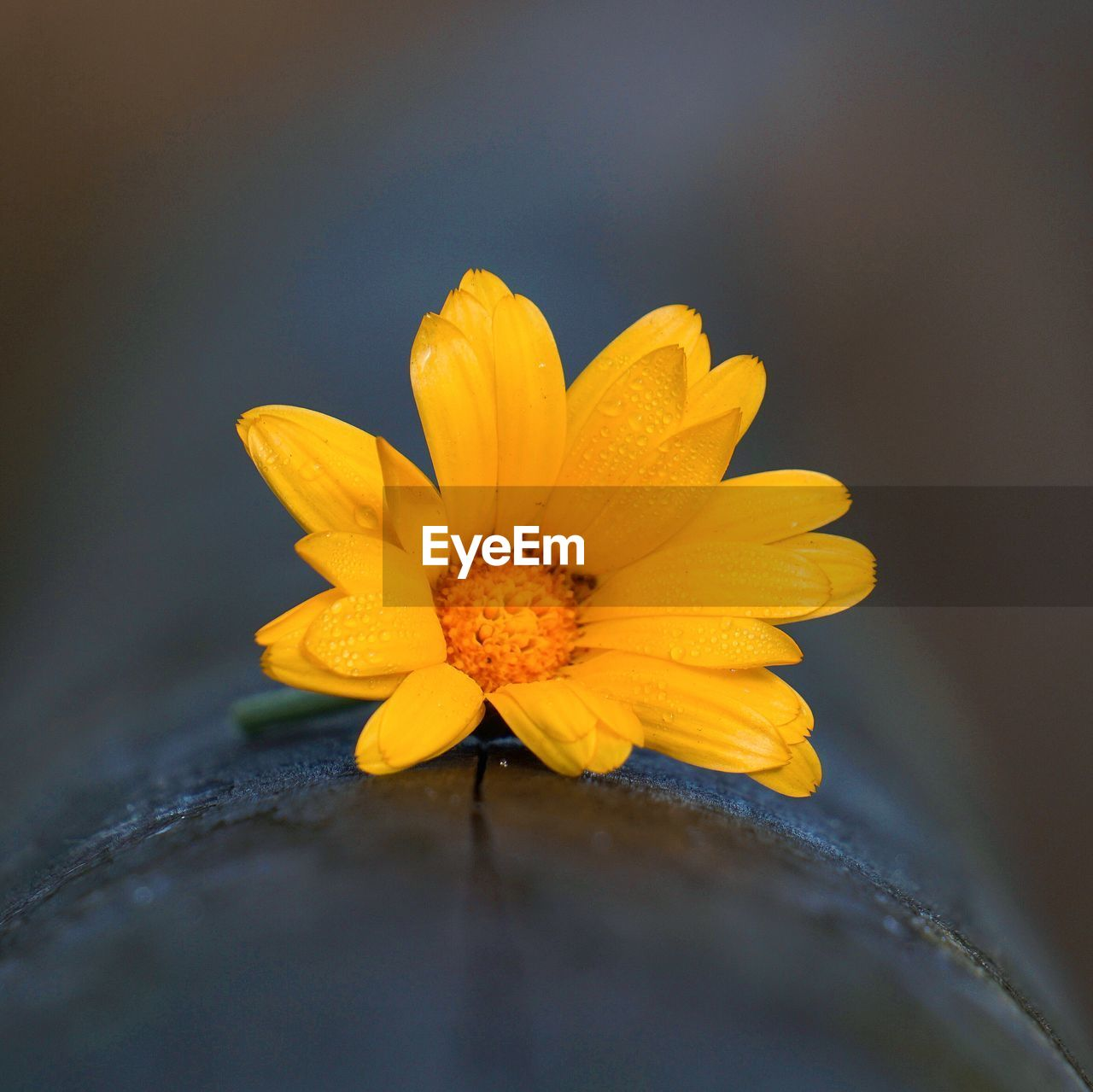 flower, flowering plant, yellow, fragility, vulnerability, petal, freshness, beauty in nature, plant, flower head, inflorescence, close-up, growth, selective focus, pollen, nature, no people, day, outdoors