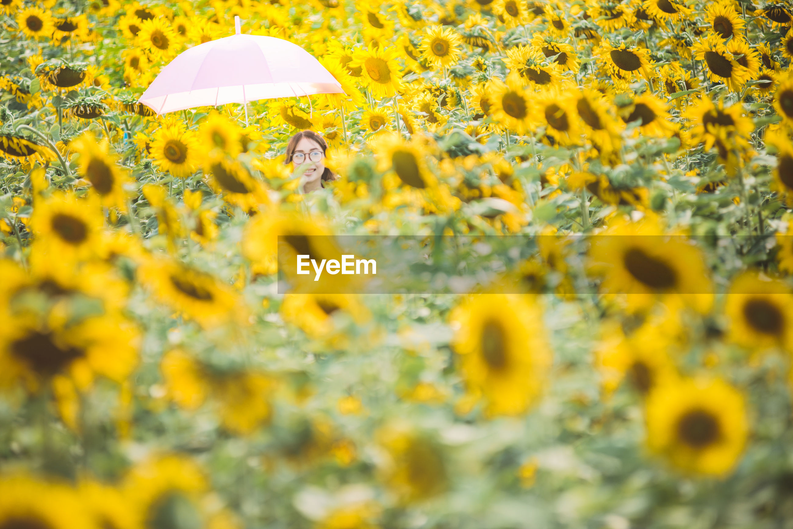 Woman with umbrella amidst sunflowers on field