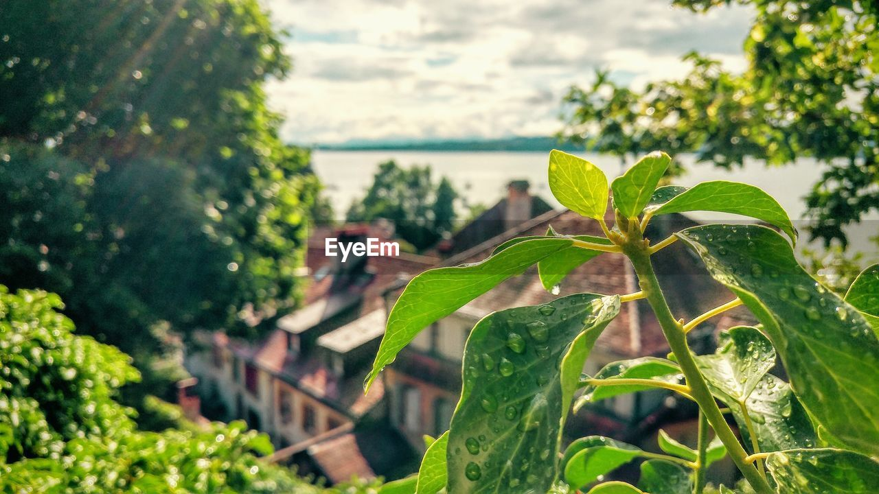 growth, leaf, plant, green color, nature, focus on foreground, day, outdoors, close-up, beauty in nature, tree, no people, freshness, water, sky