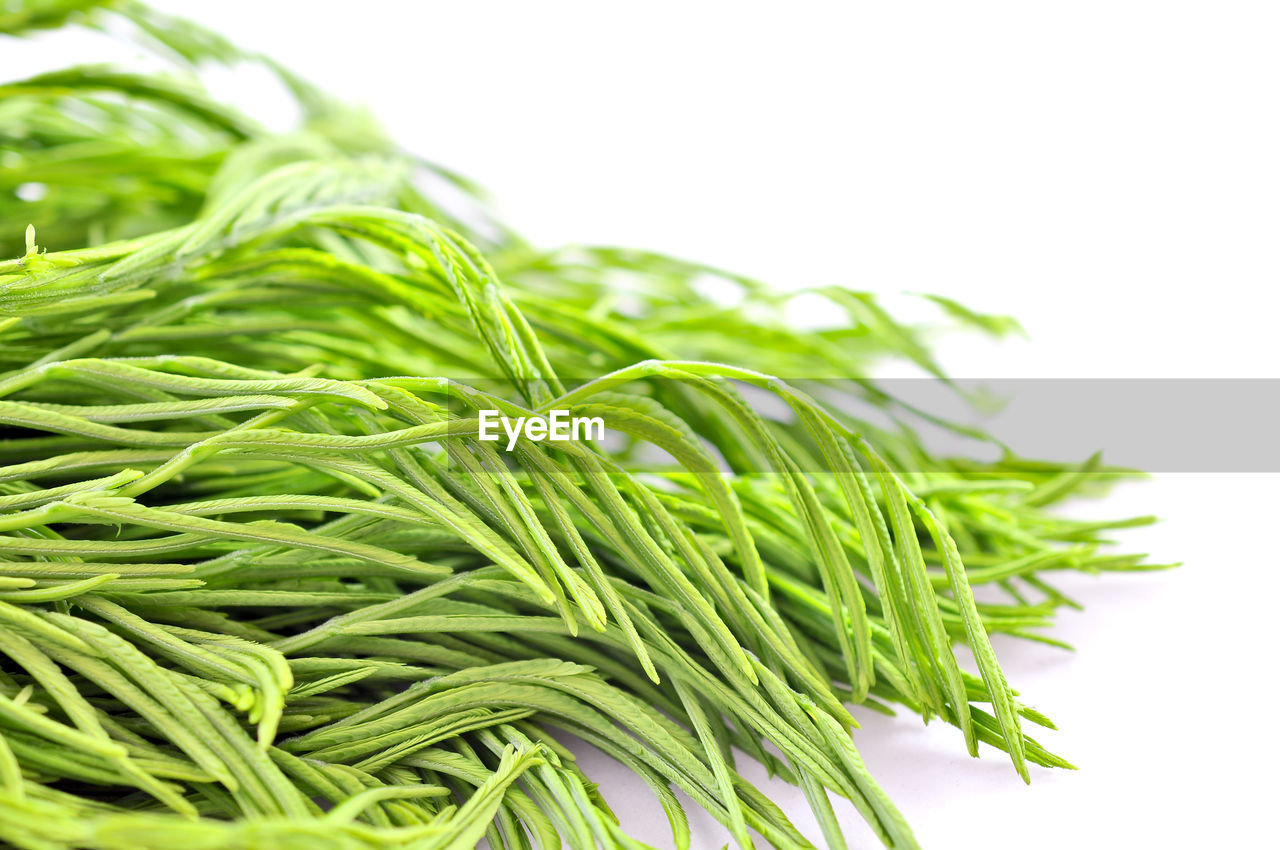 green color, close-up, freshness, food, white background, food and drink, studio shot, no people, healthy eating, outdoors, day