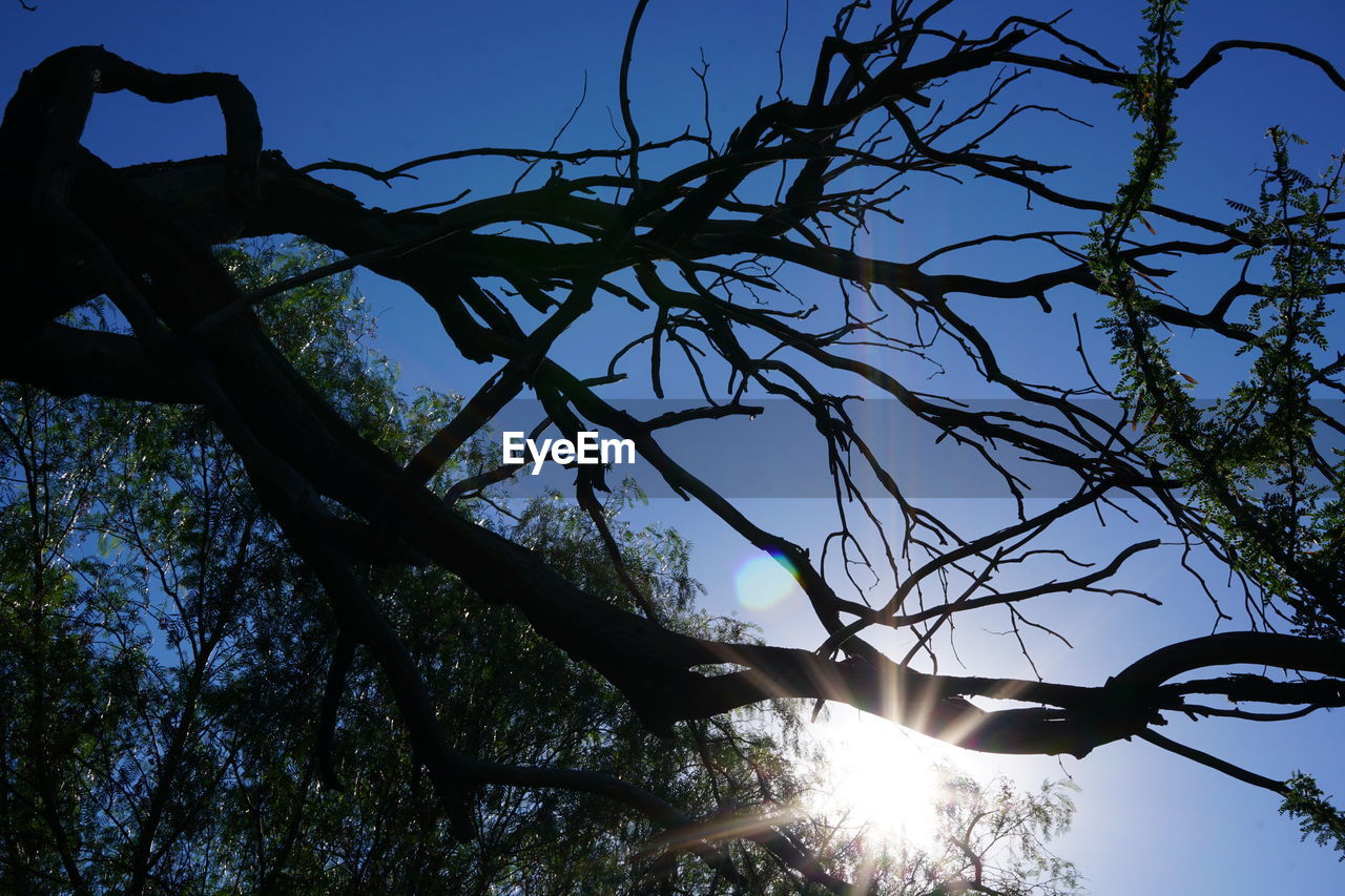 low angle view, tree, nature, sky, branch, beauty in nature, outdoors, sunlight, no people, day, silhouette, clear sky, scenics, forest, growth, bare tree
