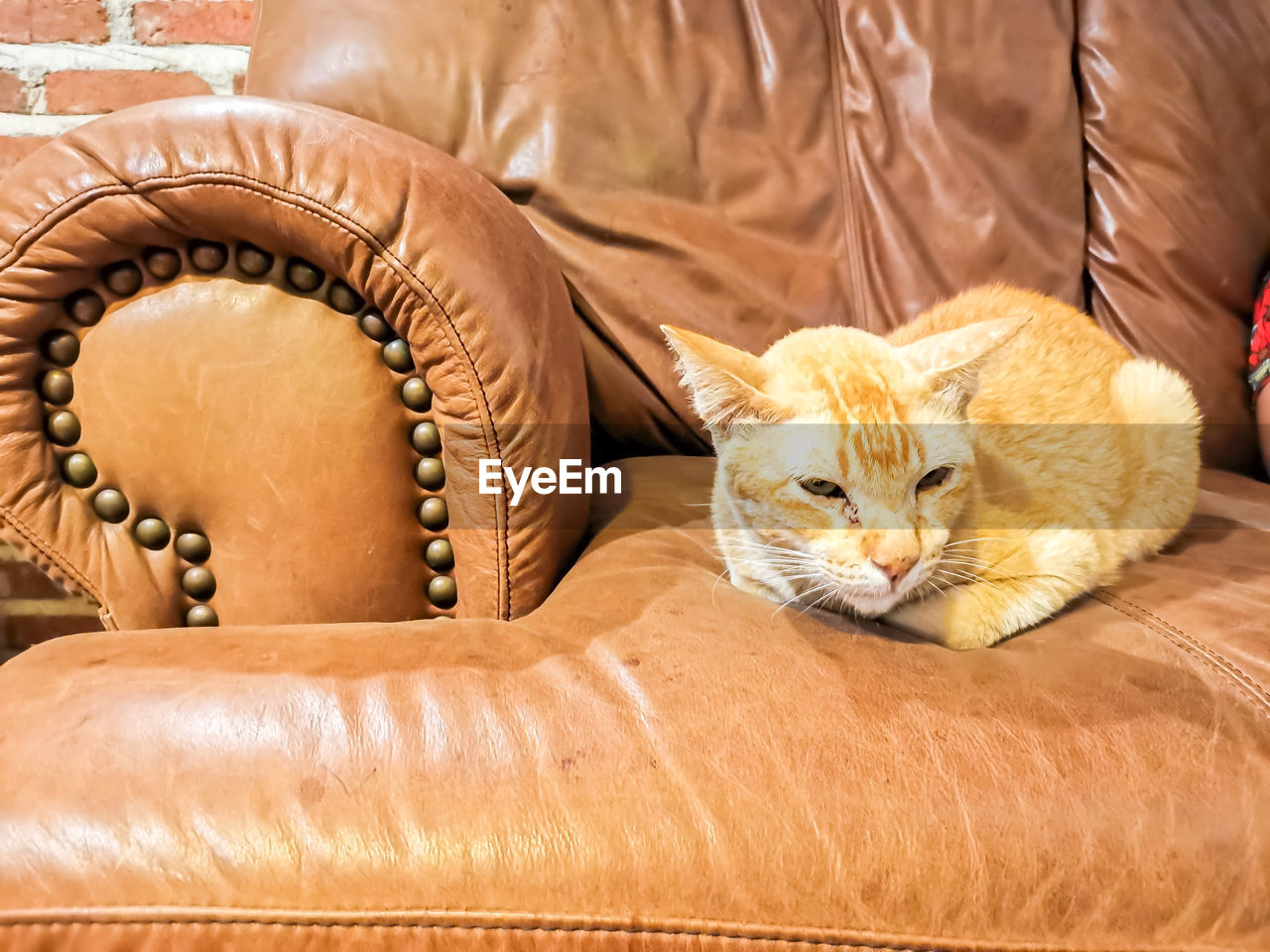 CAT RESTING ON CHAIR