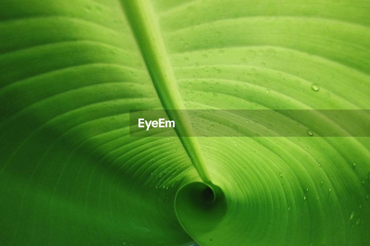 Close-Up Of Wet Green Leaf