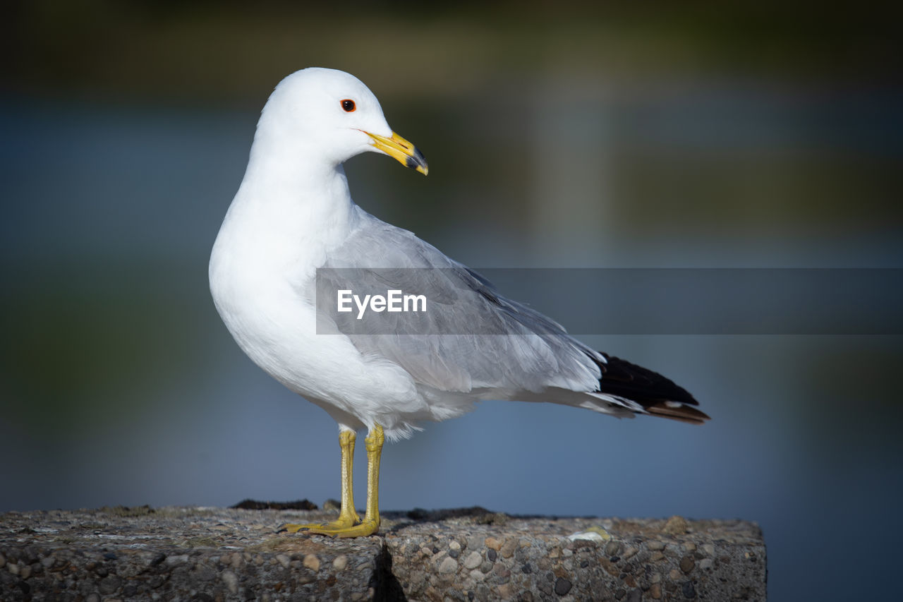 Close-up of seagull perching on a ledge