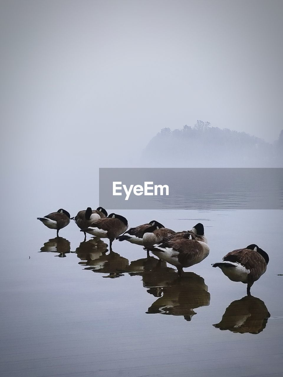 fog, group of animals, vertebrate, animal themes, animal, bird, animal wildlife, water, sky, beauty in nature, animals in the wild, lake, nature, waterfront, tranquility, no people, large group of animals, copy space, flock of birds