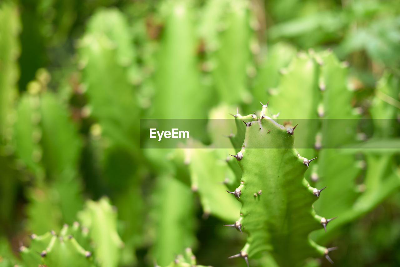 green color, growth, plant, beauty in nature, close-up, no people, day, focus on foreground, nature, selective focus, plant part, leaf, outdoors, freshness, full frame, green, spiked, tranquility, insect, wet, spiky