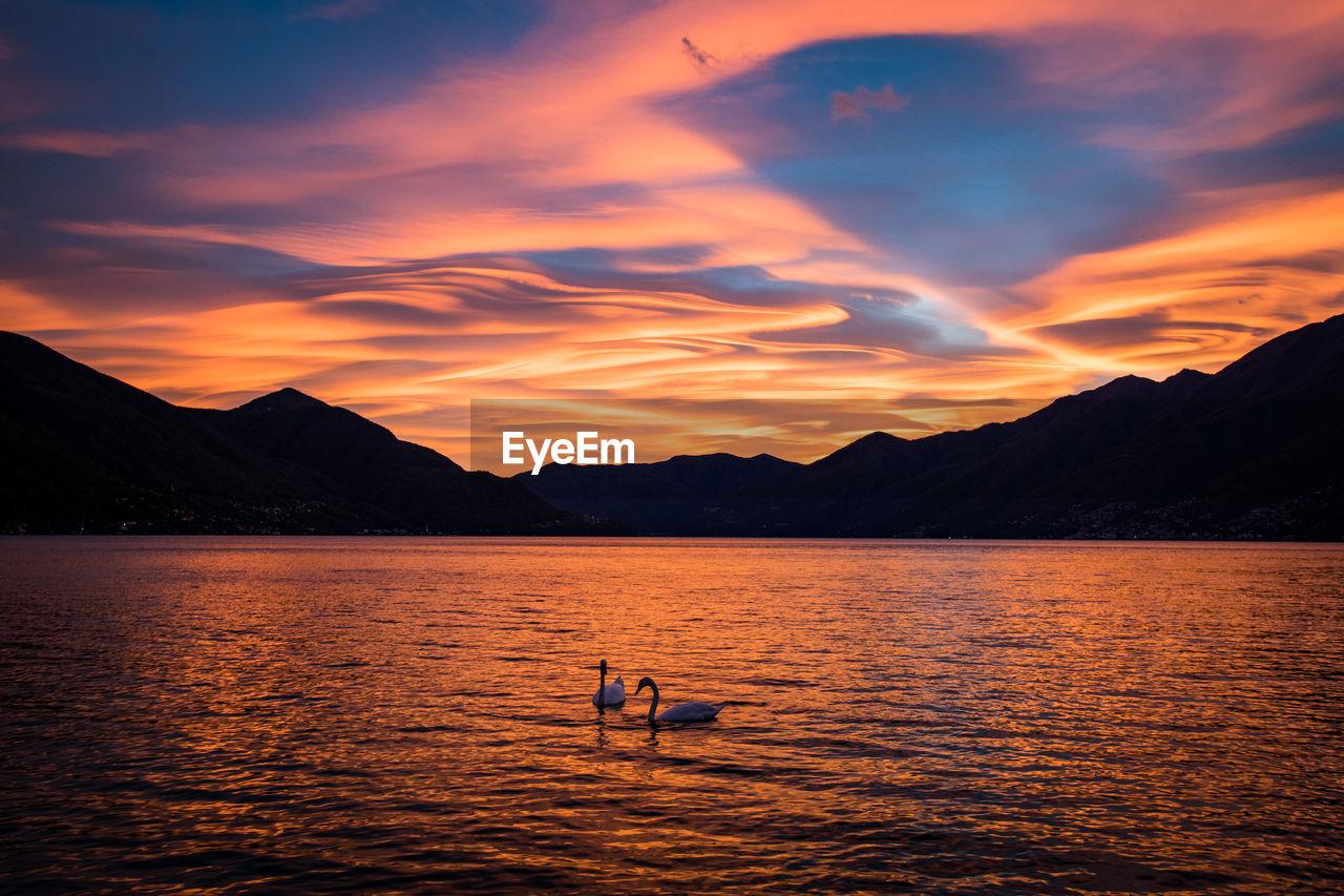 Swans In Lake Against Orange Sky During Sunset
