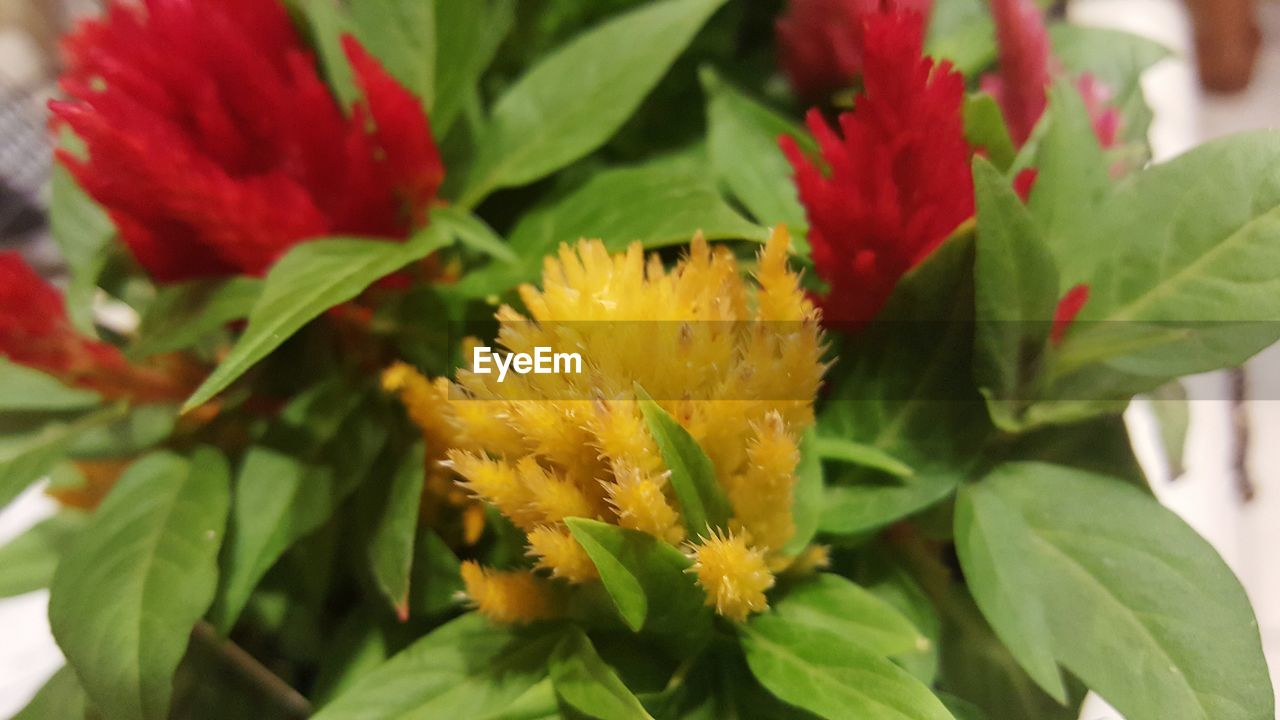 flower, leaf, beauty in nature, growth, nature, fragility, petal, plant, freshness, green color, flower head, no people, close-up, day, red, blooming, animal themes, yellow, outdoors