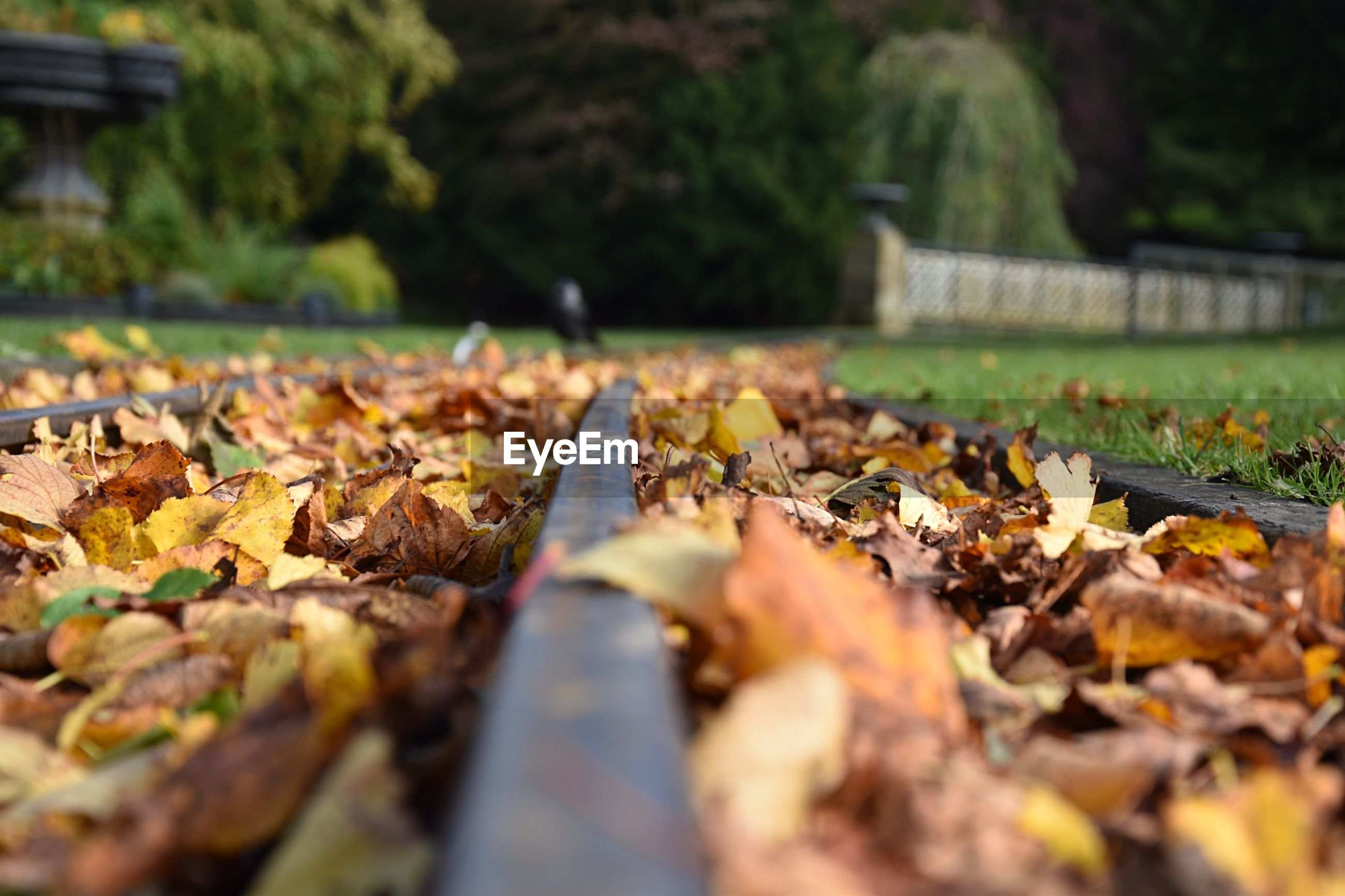 Close-up of fallen leaves in park