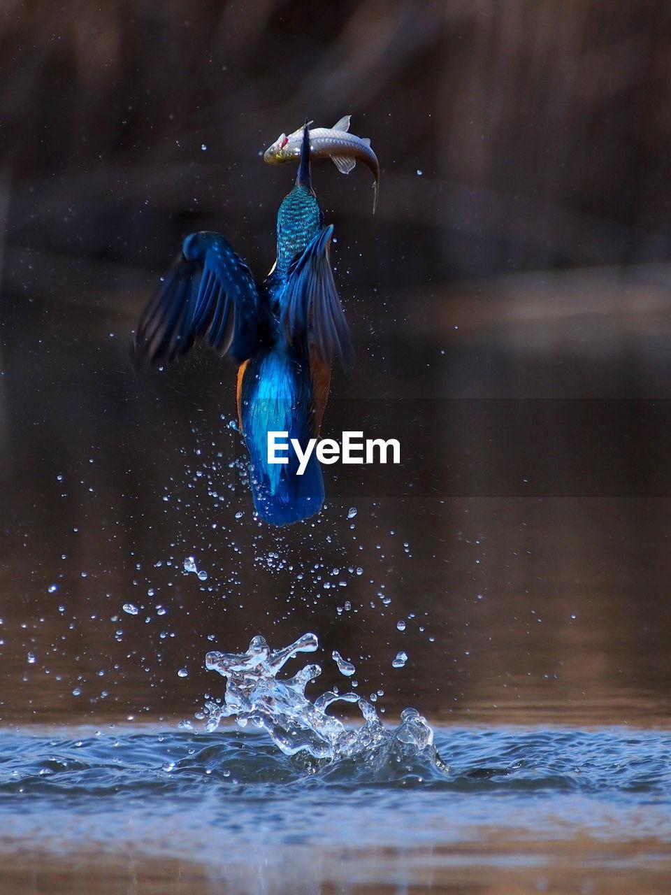 View of bird in water