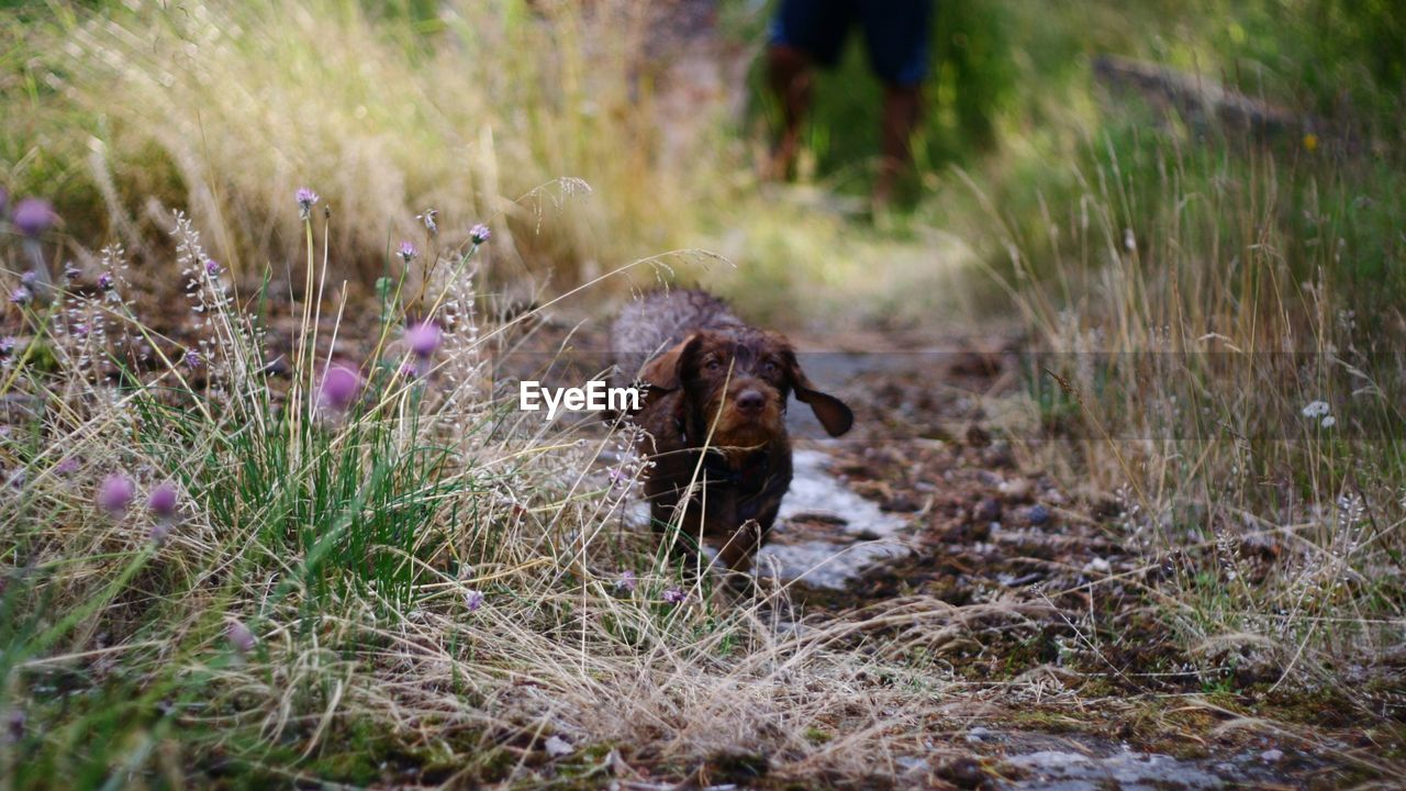 plant, grass, land, one animal, field, nature, growth, mammal, pets, domestic animals, day, vertebrate, selective focus, domestic, beauty in nature, outdoors, people, flowering plant