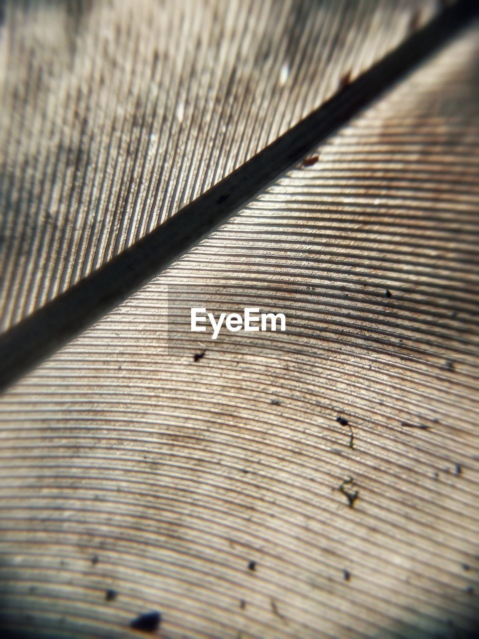 close-up, wood - material, no people, indoors, textured, brown, pattern, sunlight, full frame, shadow, day