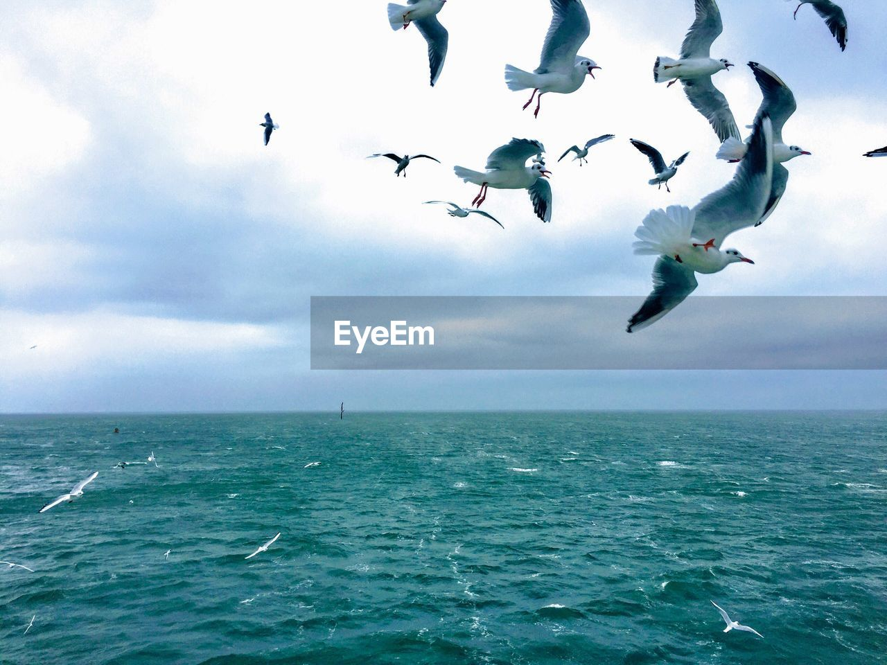 sea, animals in the wild, water, sky, group of animals, animal themes, animal, animal wildlife, vertebrate, flying, bird, horizon over water, horizon, large group of animals, beauty in nature, cloud - sky, waterfront, nature, scenics - nature, no people, seagull, flock of birds, outdoors, marine, turquoise colored