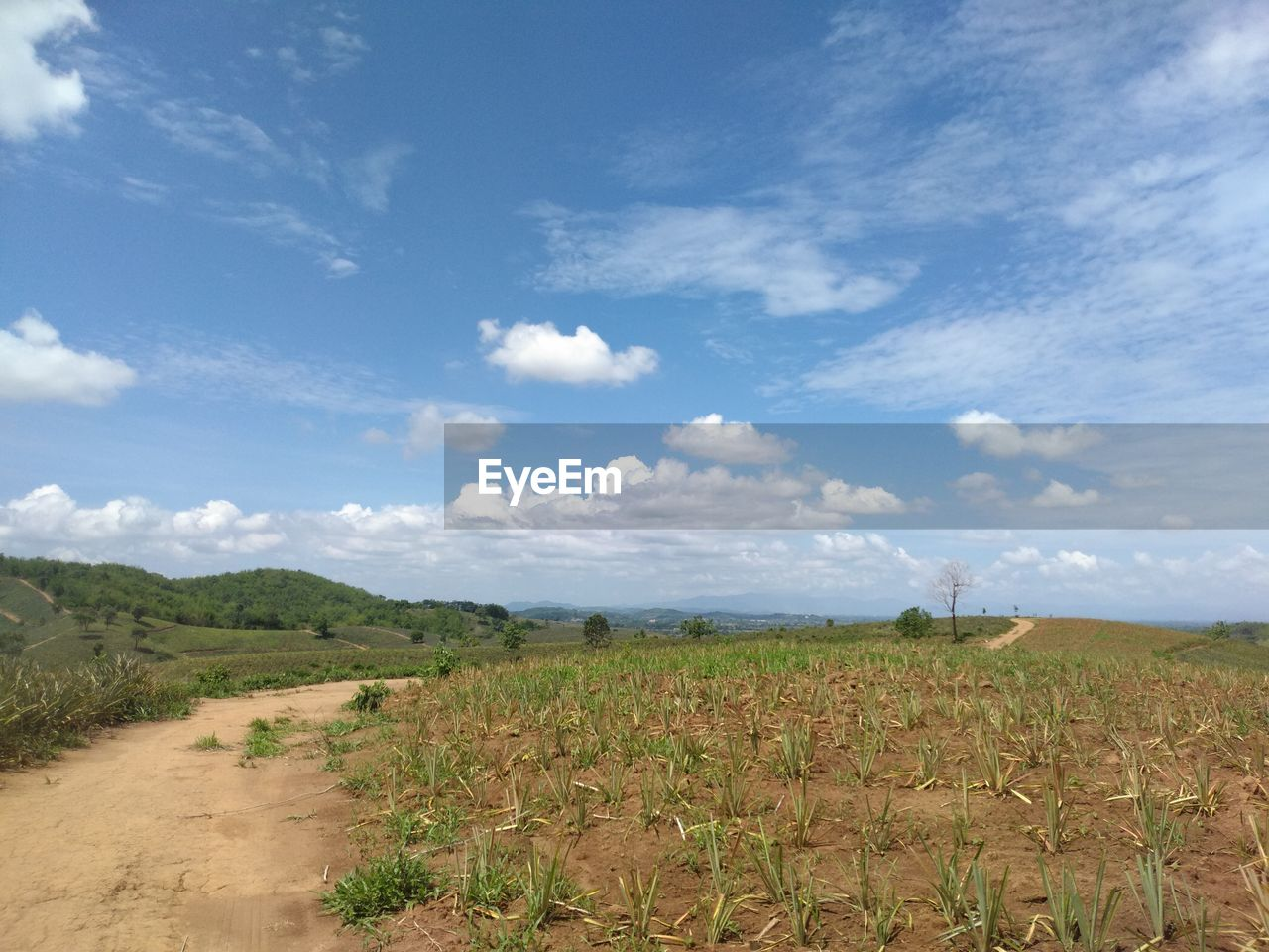 sky, landscape, environment, cloud - sky, land, tranquility, field, tranquil scene, scenics - nature, beauty in nature, day, nature, rural scene, plant, no people, agriculture, growth, non-urban scene, outdoors, horizon over land, plantation