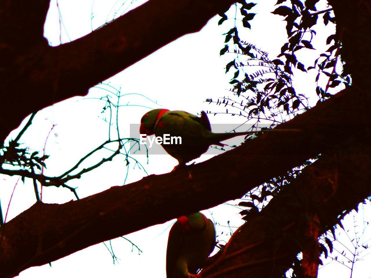 tree, perching, animal themes, low angle view, branch, bird, animals in the wild, one animal, animal wildlife, nature, day, outdoors, no people, silhouette, beauty in nature, clear sky, sky