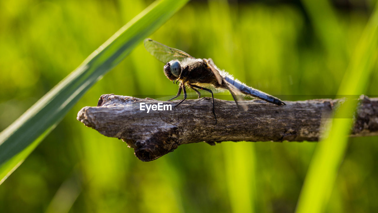 animal wildlife, animal, animal themes, animals in the wild, one animal, invertebrate, plant, insect, close-up, no people, focus on foreground, green color, day, nature, selective focus, outdoors, tree, zoology, animal wing, growth