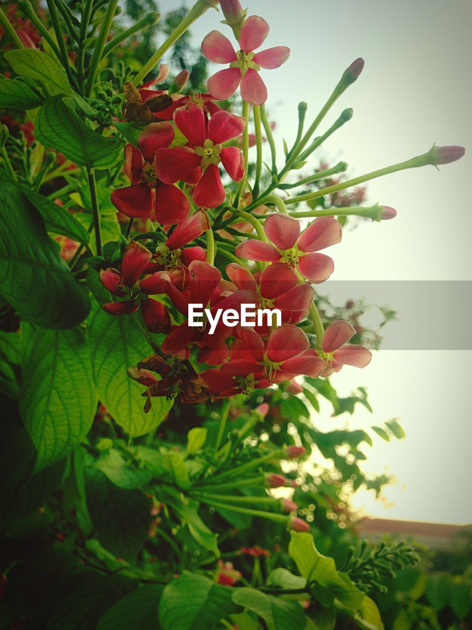 growth, plant, nature, green color, freshness, flower, leaf, beauty in nature, fragility, day, no people, red, close-up, outdoors, flower head, tree