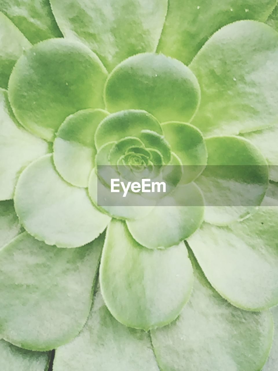 green color, freshness, vegetable, growth, food and drink, close-up, plant, full frame, leaf, no people, nature, backgrounds, beauty in nature, day, food, fragility, healthy eating, outdoors, water, flower head