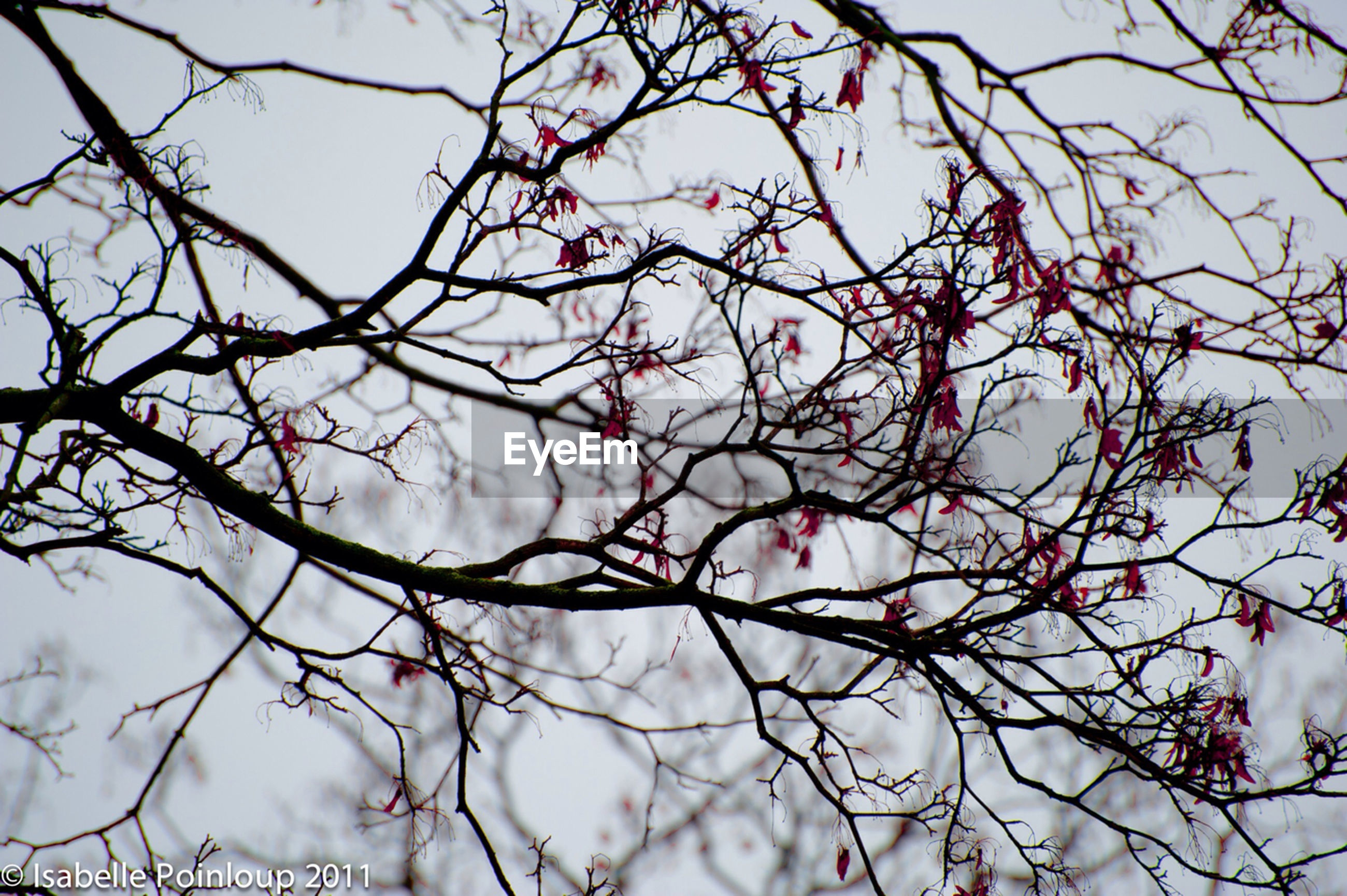 branch, tree, low angle view, bare tree, sky, nature, beauty in nature, growth, flower, twig, tranquility, focus on foreground, outdoors, fragility, day, blossom, freshness, no people, cloud - sky, close-up
