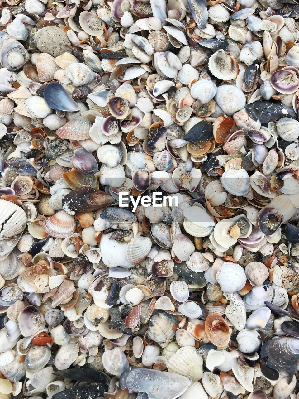 full frame, backgrounds, abundance, large group of objects, pebble, nature, seashell, no people, directly above, outdoors, day, beach, close-up, pebble beach