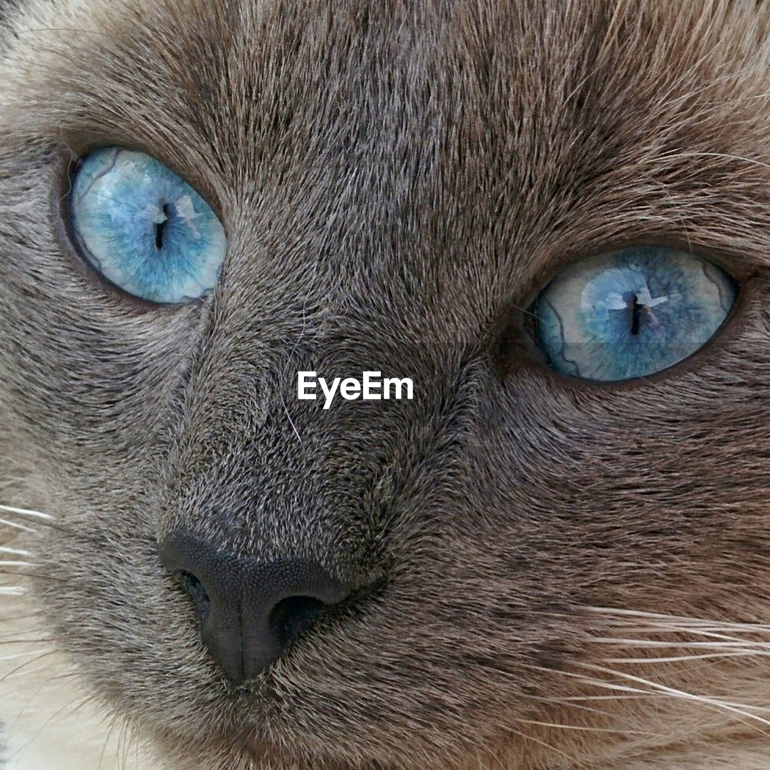 one animal, animal themes, full frame, animal eye, animal head, close-up, backgrounds, animal body part, portrait, domestic animals, mammal, looking at camera, part of, cat, extreme close up, pets, extreme close-up, whisker, domestic cat, animal hair