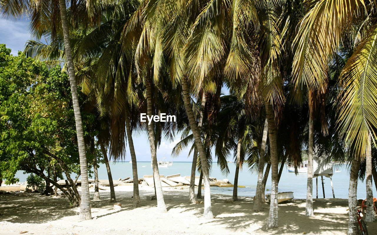 tree, tropical climate, palm tree, plant, beach, land, nature, water, growth, sea, sand, beauty in nature, tranquility, no people, sunlight, trunk, tree trunk, outdoors, day, coconut palm tree, tropical tree
