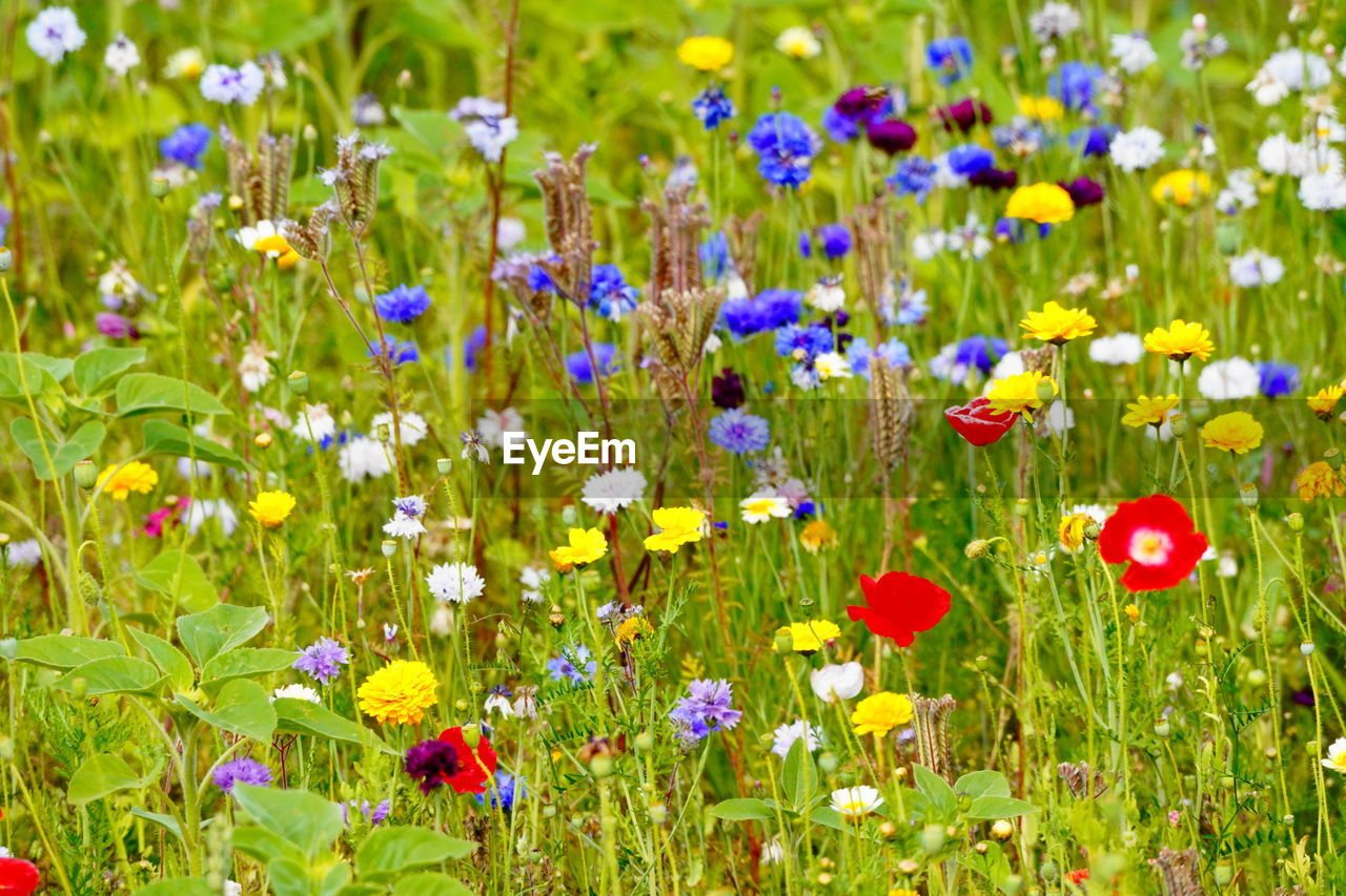 flowering plant, flower, plant, growth, fragility, beauty in nature, vulnerability, freshness, field, land, multi colored, flower head, nature, no people, close-up, inflorescence, green color, petal, purple, choice, flowerbed, outdoors, springtime, ornamental garden