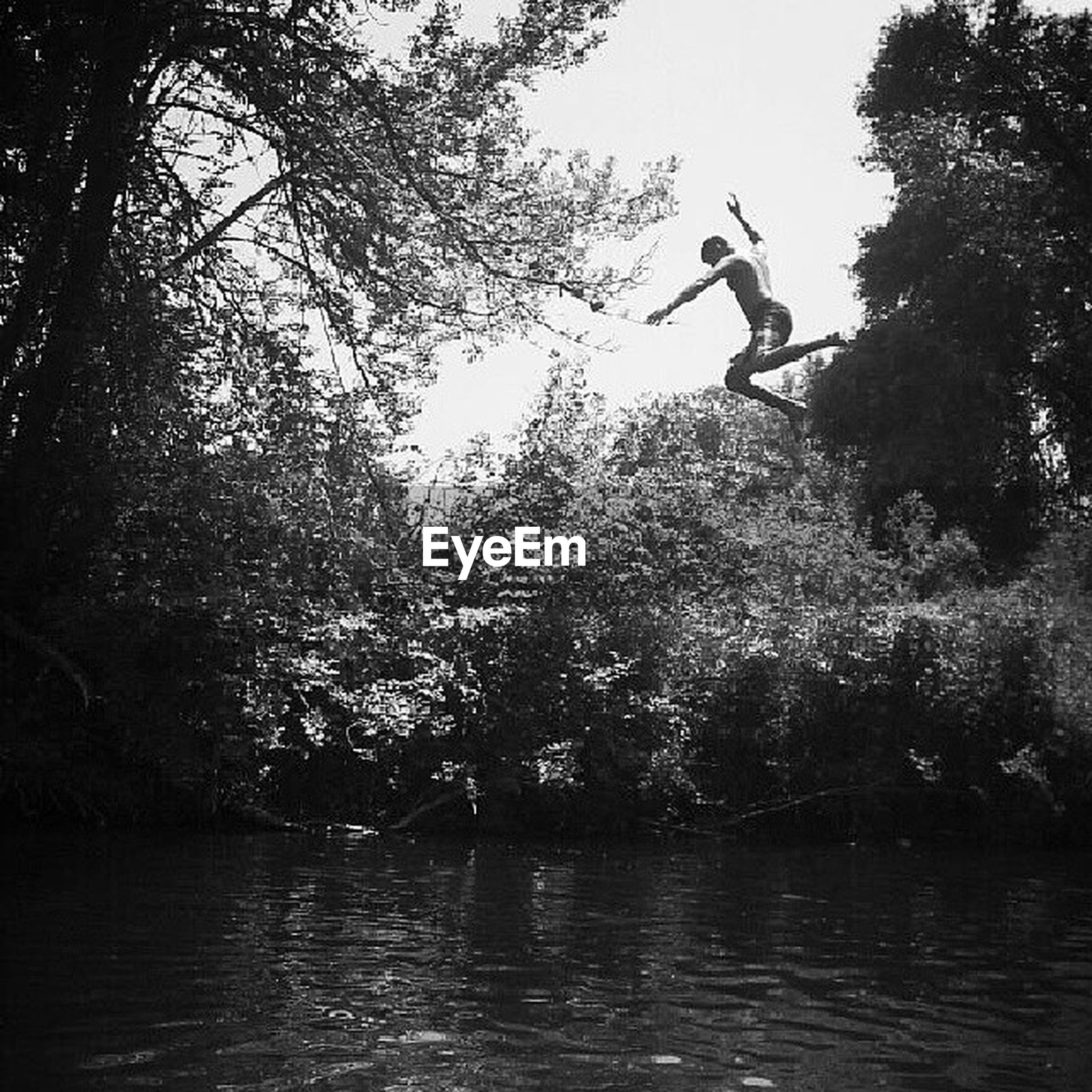 tree, water, leisure activity, waterfront, tranquility, nature, lifestyles, tranquil scene, lake, beauty in nature, silhouette, scenics, men, full length, jumping, mid-air, forest, idyllic
