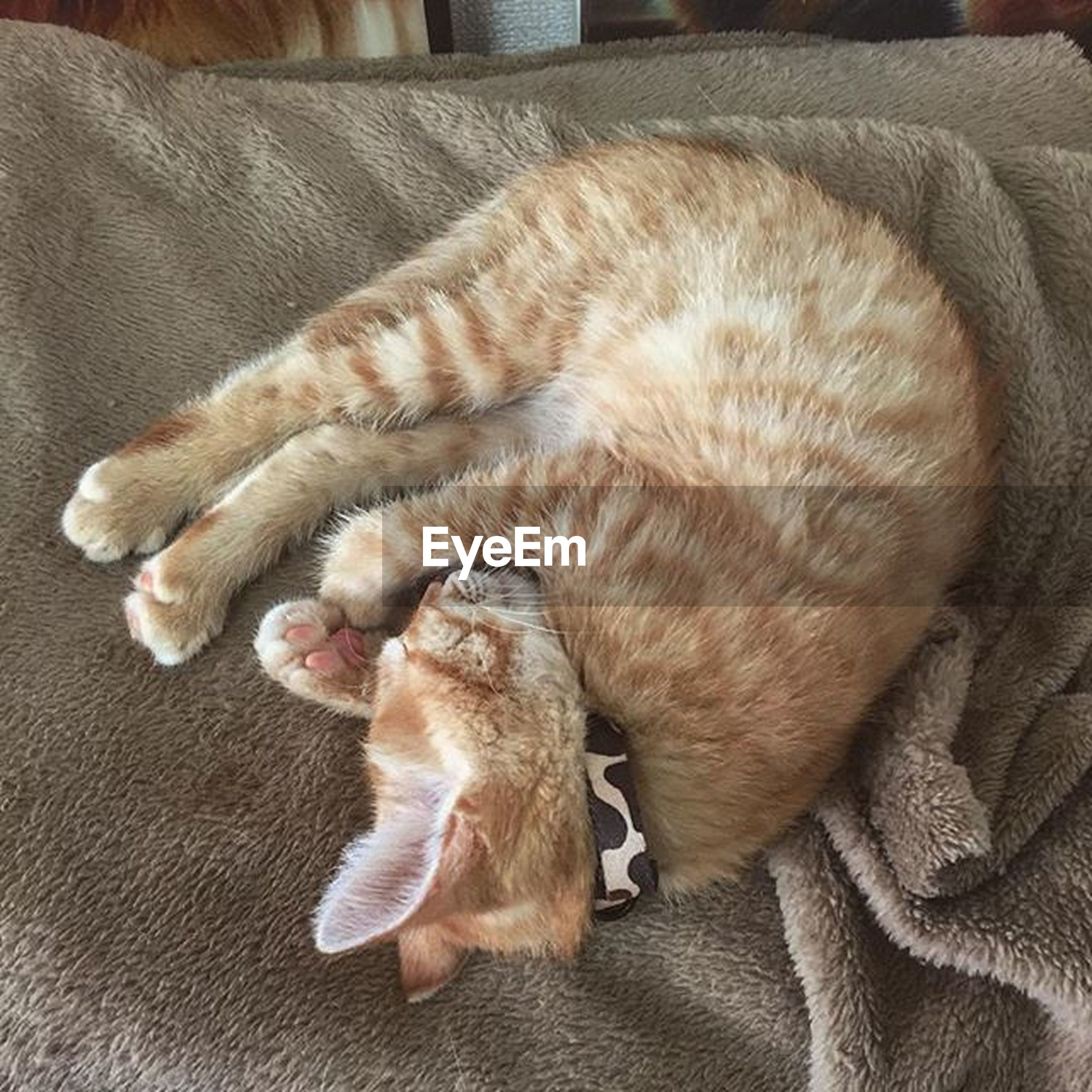 animal themes, pets, domestic animals, one animal, mammal, indoors, relaxation, sleeping, resting, dog, lying down, high angle view, home interior, domestic cat, comfortable, flooring, full length, cat, no people, eyes closed
