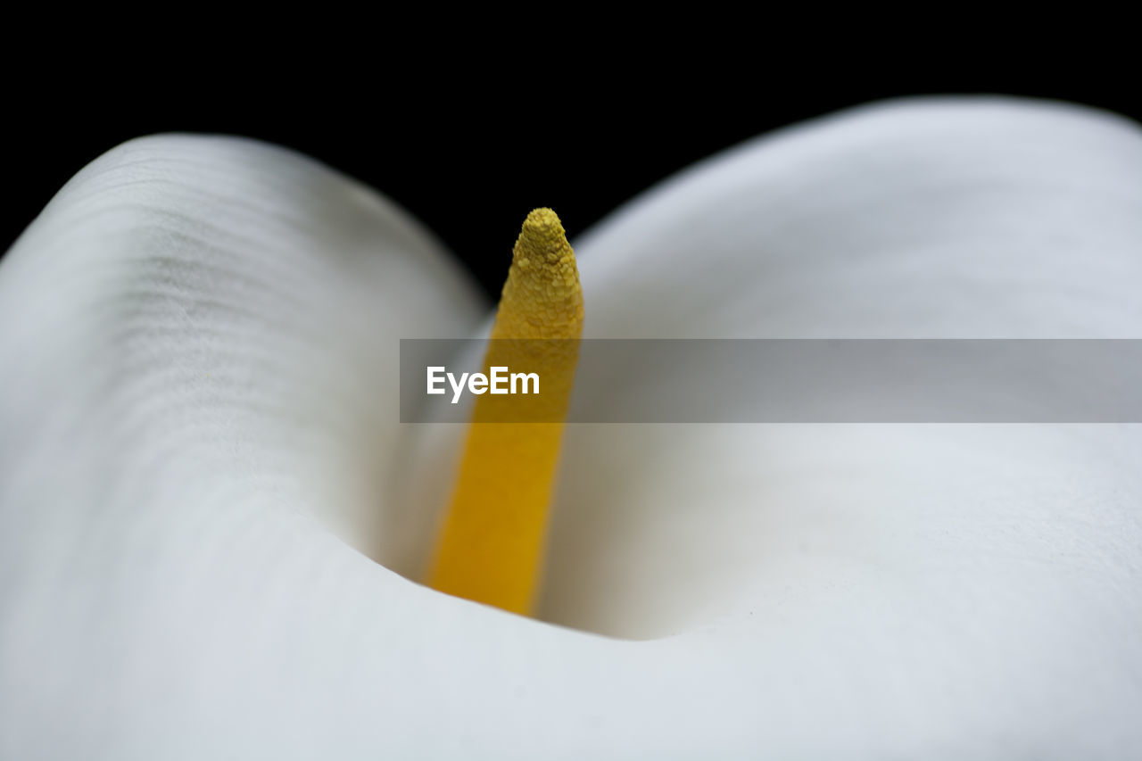 close-up, indoors, studio shot, yellow, still life, no people, freshness, white color, selective focus, food and drink, nature, beauty in nature, petal, wellbeing, black background, table, flower head, flower, healthy eating, calla lily