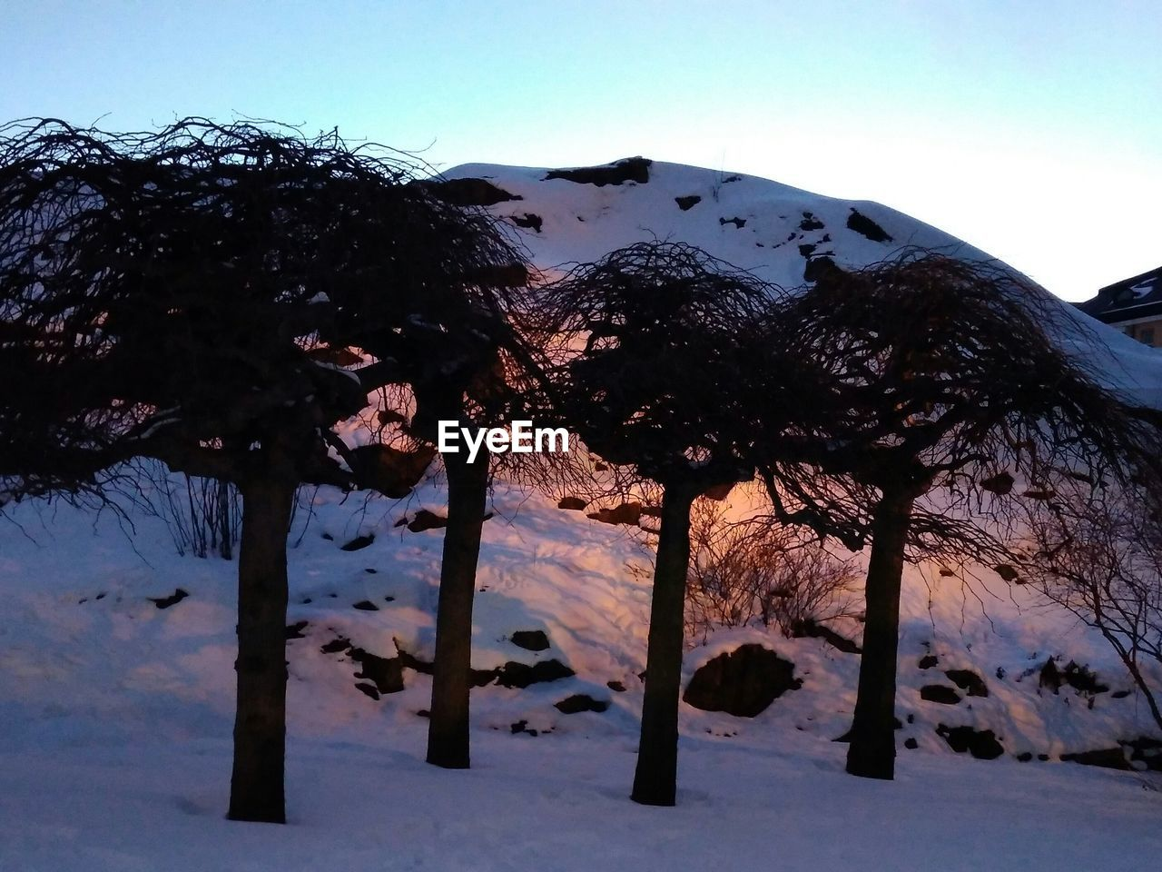 tree, nature, winter, snow, outdoors, no people, clear sky, sky, beauty in nature, cold temperature, day, growth, tree trunk, branch, close-up