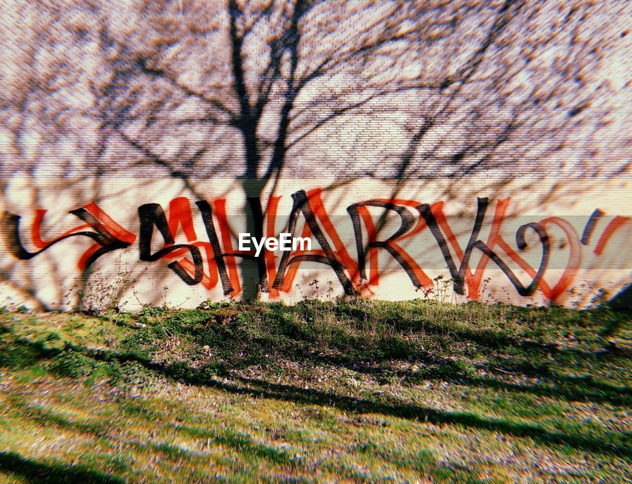 plant, tree, no people, nature, wall - building feature, day, bare tree, architecture, close-up, growth, selective focus, text, beauty in nature, built structure, graffiti, grass, outdoors, branch, wall, creativity