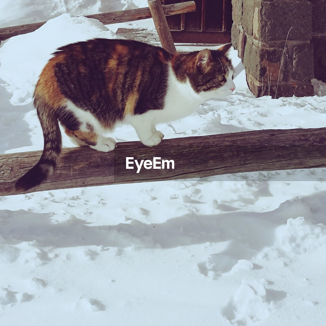 domestic cat, pets, domestic animals, animal themes, one animal, mammal, feline, cat, no people, day, relaxation, cold temperature, full length, outdoors, snow, nature