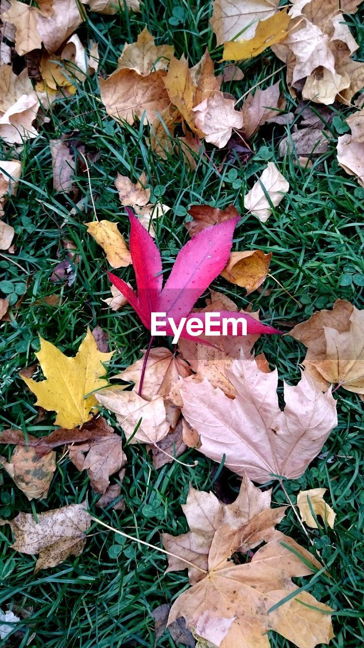 leaf, nature, autumn, high angle view, field, dry, day, outdoors, change, beauty in nature, no people, plant, grass, fragility, growth, flower, close-up, flower head, toadstool, freshness