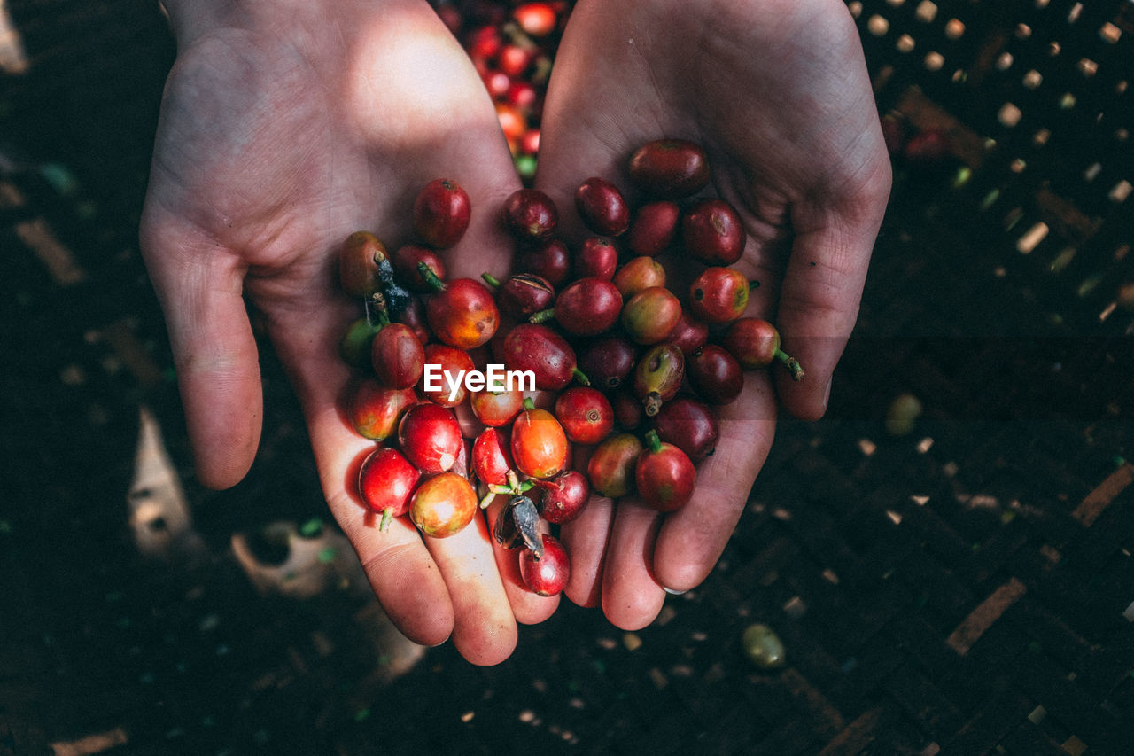 Close-Up Of Hands Holding Berries