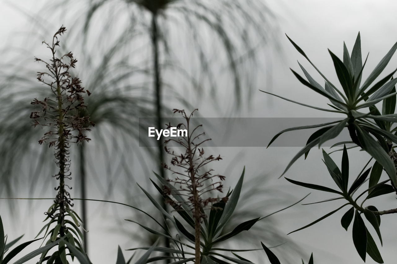 Close-Up Of Fresh Plants Against Sky