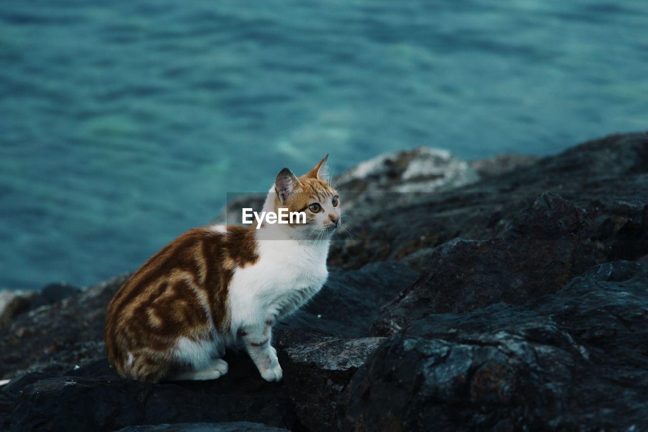 Cat looking away on rock