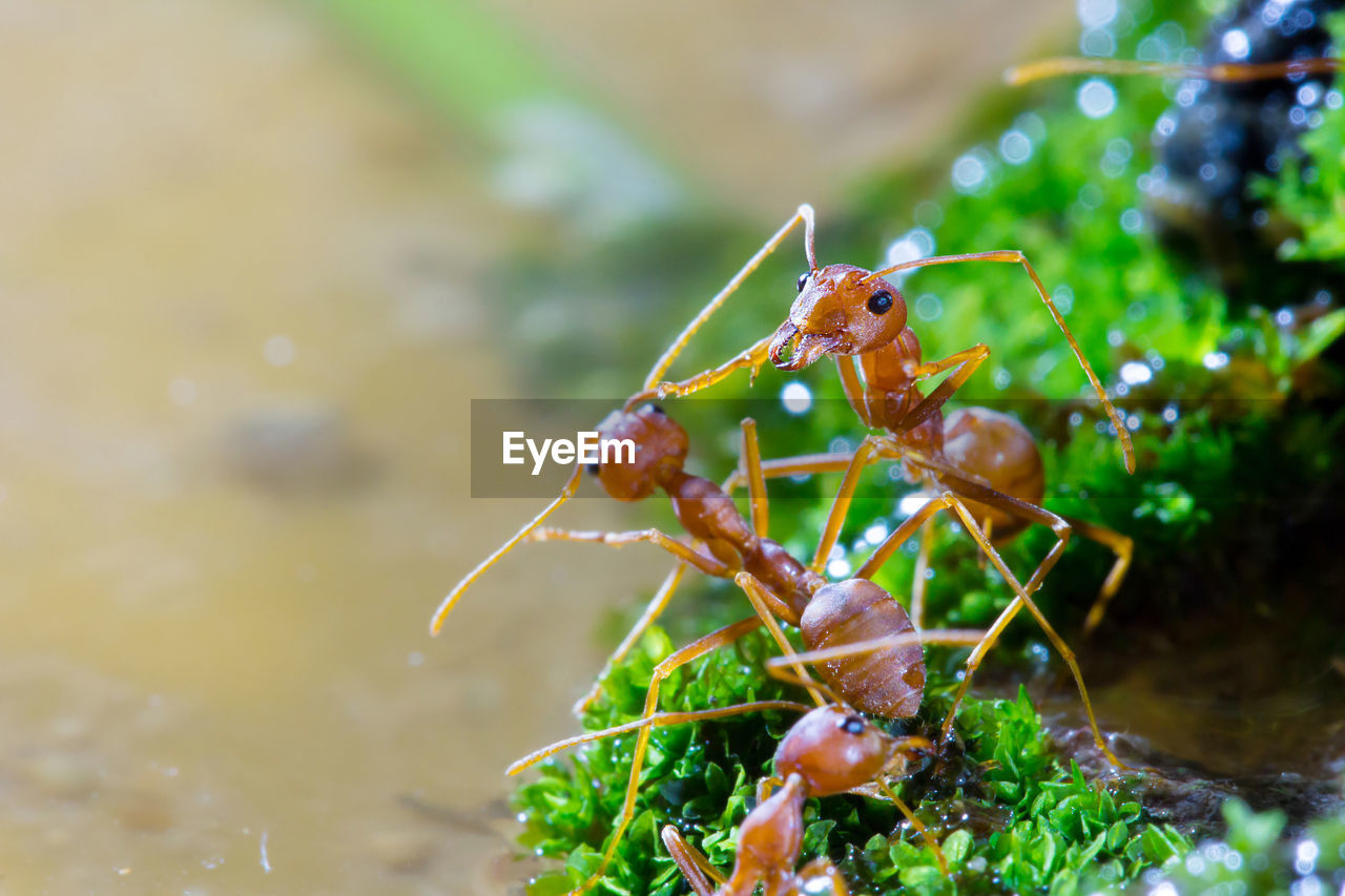 animal wildlife, animals in the wild, animal, animal themes, invertebrate, insect, one animal, close-up, selective focus, nature, no people, plant, day, focus on foreground, zoology, growth, crustacean, animal antenna, outdoors, water